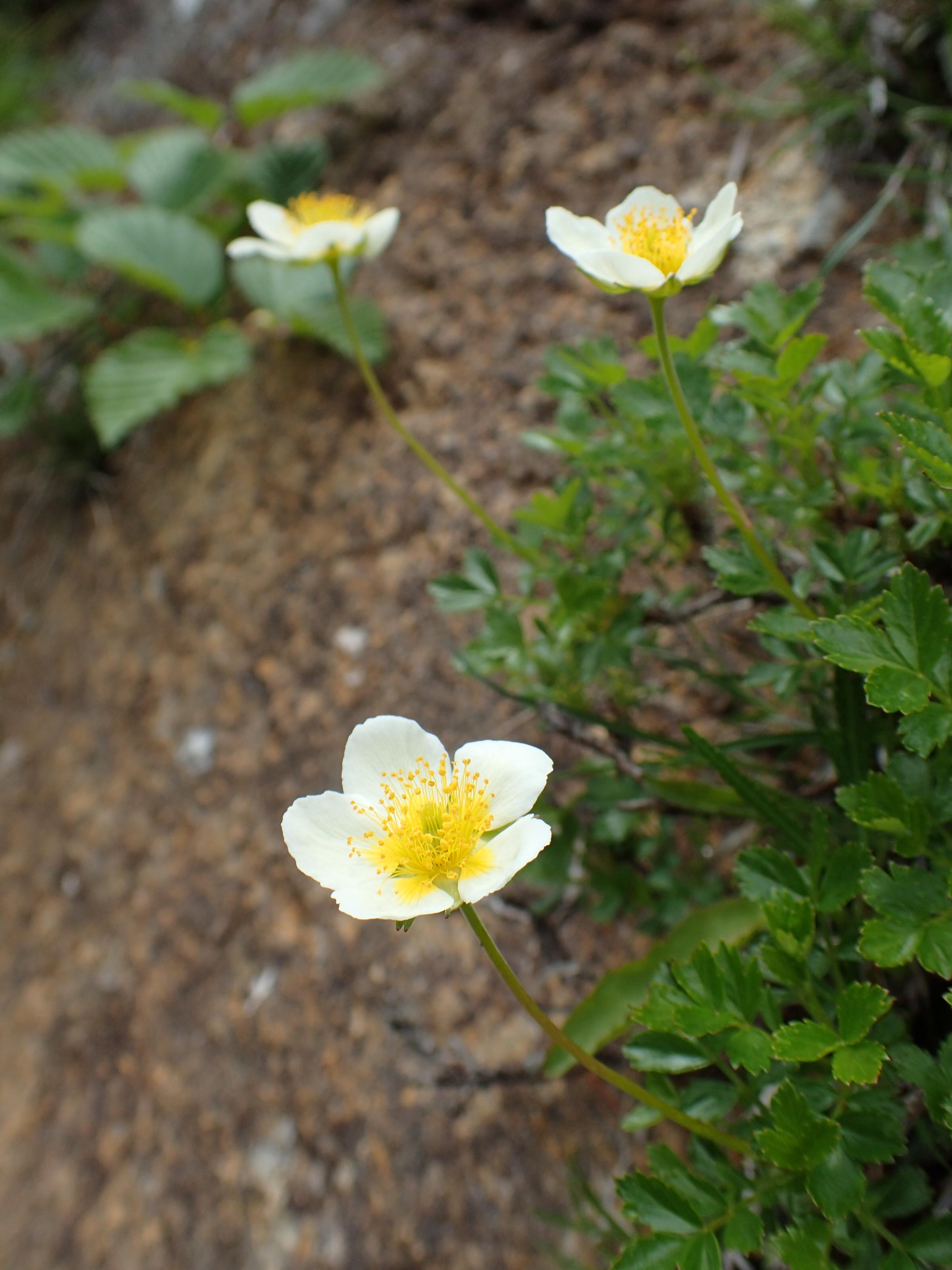 http://www.apoi-geopark.jp/blog/P6071545.JPG