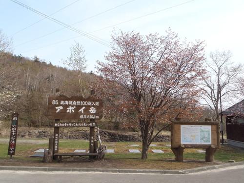 05031アポイ岳桜.jpg