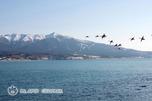 白鳥とアポイ岳